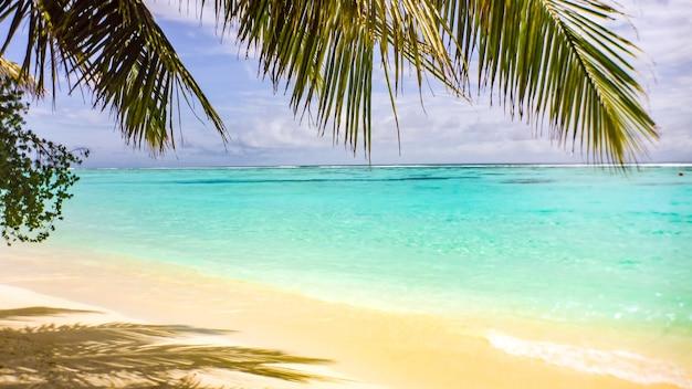 Folha de palmeira sobre a praia de areia branca e mar azul-turquesa, maldivas.