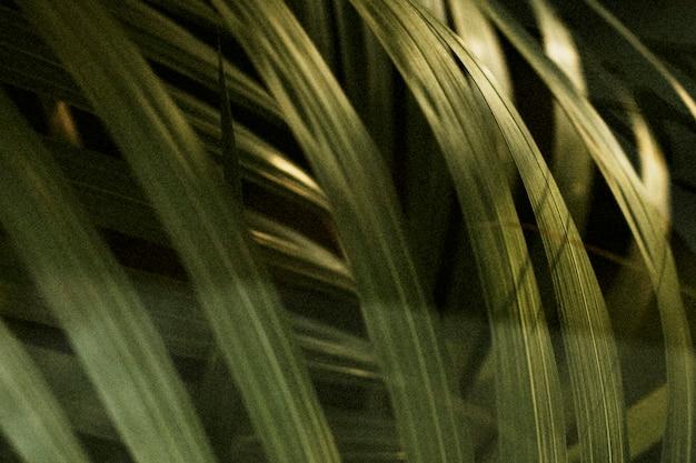 Folha de palmeira tropical de perto