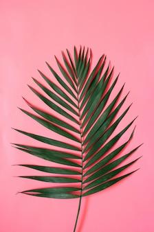 Folha de palmeira tropical em fundo rosa pastel