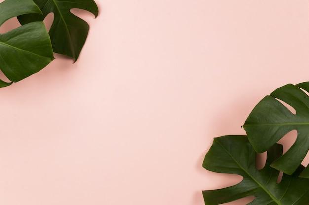 Folha de palmeira tropical em fundo rosa