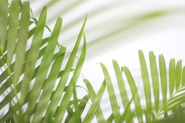 Folha de palmeira tropical verde com sombra na parede branca