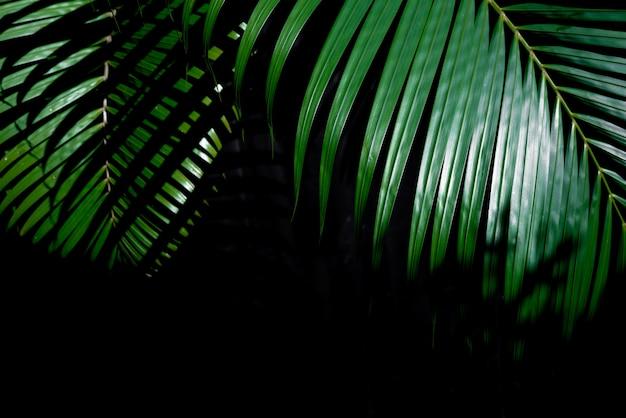 Folha de palmeira tropical verde sobre fundo escuro