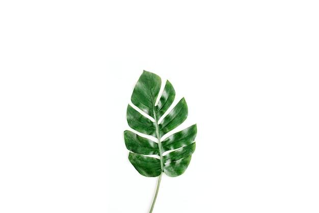 Folha de palmeira tropical