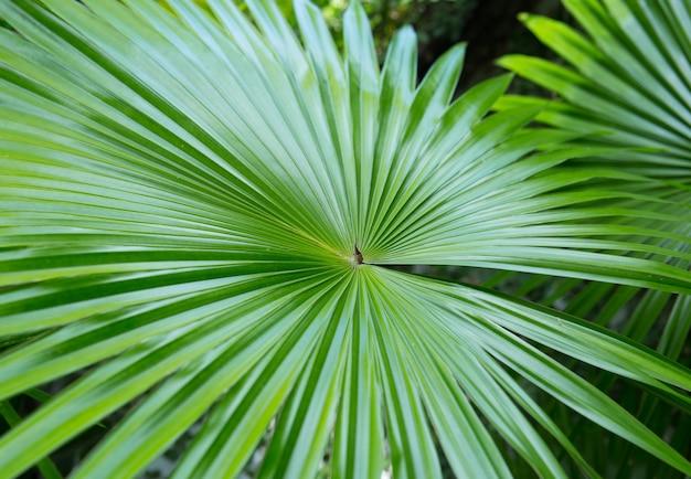 Folha de palmeira verde brilhante fechada em natureza tropical
