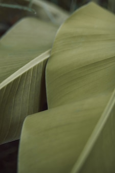 Folha de palmeira verde-clara. detalhes tropicais na natureza selvagem