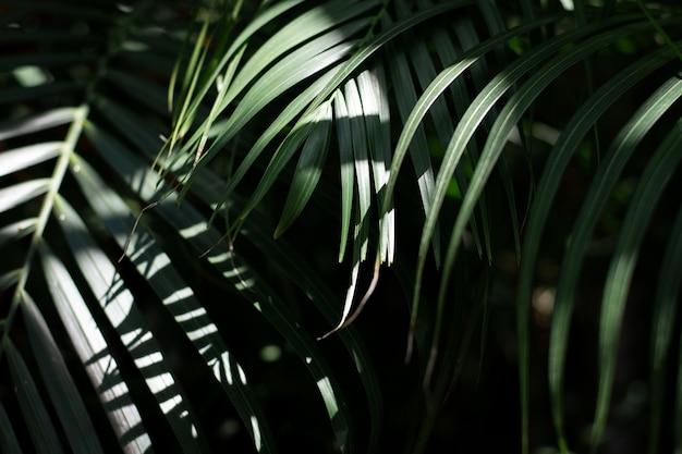 Folha de palmeira verde com luz do sol em tom tropical escuro.