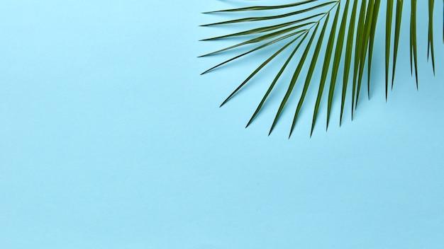 Folha de palmeira verde fresca sobre um fundo azul com espaço para texto. fundo natural de verão. postura plana