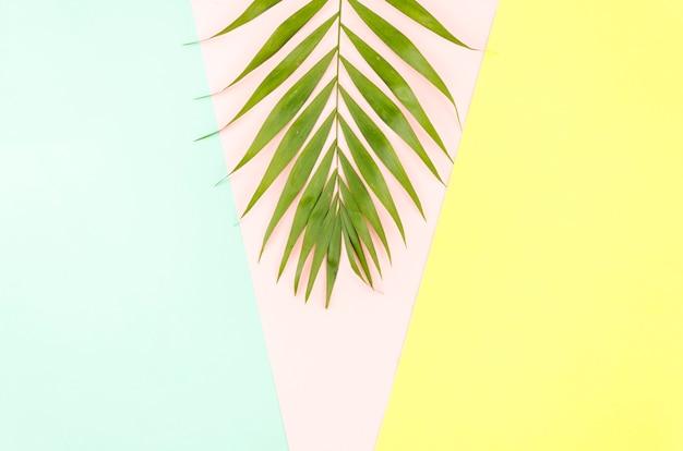 Folha de palmeira verde grande na mesa