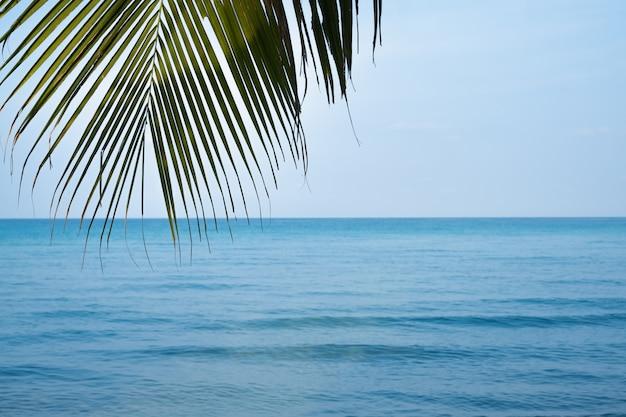 Folha de palmeira verde na praia tropical