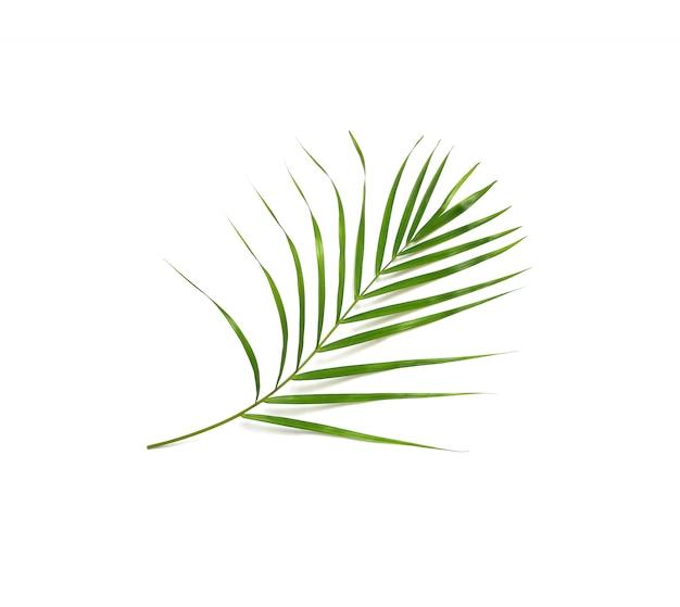 Folha de palmeira verde natureza tropical isolada