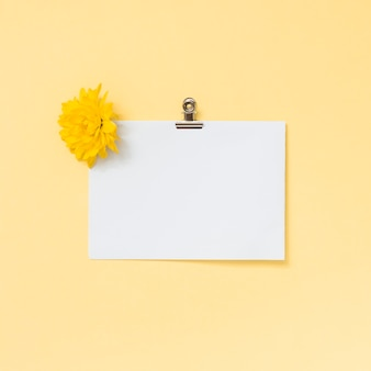 Folha de papel em branco com flor amarela