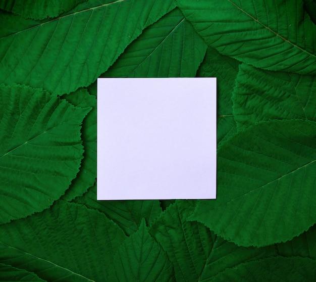 Folha de papel no meio das folhas verdes da castanha