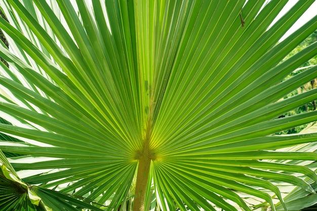 Folha de planta verde gigante em floresta tropical
