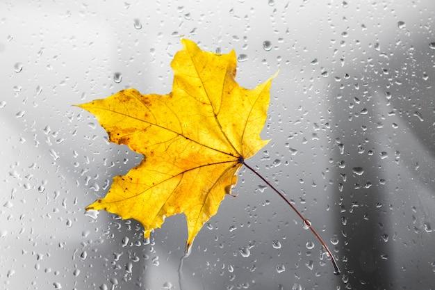Folha de plátano amarela do outono em uma janela chuvosa. o conceito de estações do outono