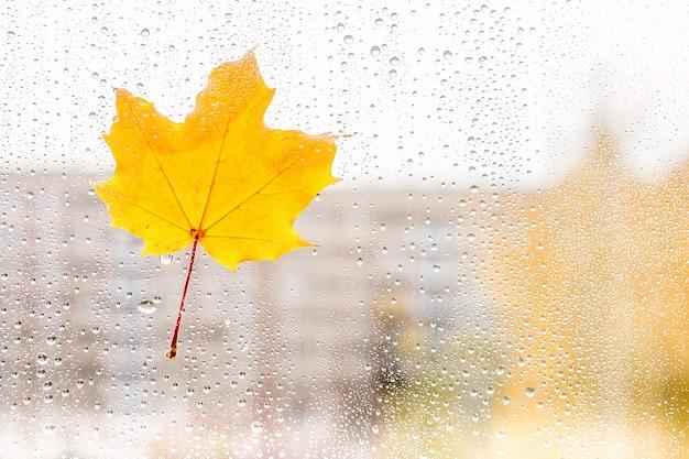 Folha de plátano do outono no vidro com gotas da água.