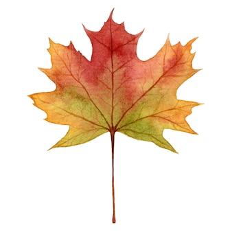Folha de plátano em cores de outono, aquarela mão desenhar ilustração