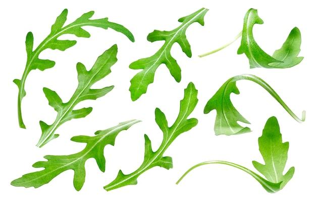 Folha de ruccola isolada na coleção de folhas de rúcula verde branca e única