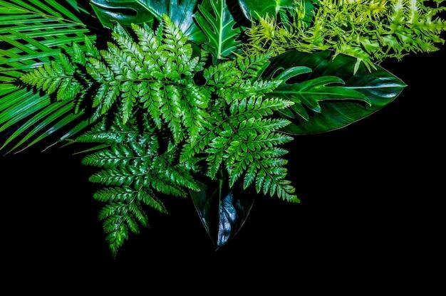 Folha de samambaia, folhagem verde exuberante no fundo da floresta tropical