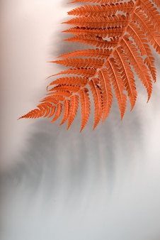 Folha de samambaia laranja brilhante contra um fundo cinza neutro com uma sombra da folha. fundo outonal minimalista com espaço de cópia.