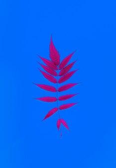 Folha de samambaia no centro da moldura em tom neon: folha rosa sobre fundo azul brilhante. postura plana. conceito mínimo.
