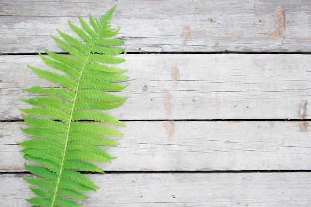 Folha de samambaia verde sobre fundo de madeira