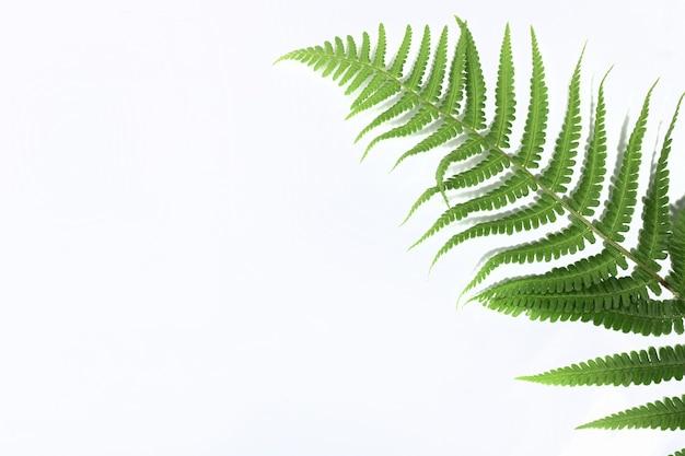 Folha de samambaia verde tropical isolada no fundo branco com sombra dura. postura plana. vista do topo. conceito mínimo de verão com folhas de samambaia. copie o espaço
