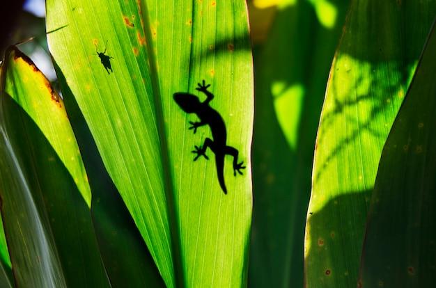Folha de selva verde com gecko no topo