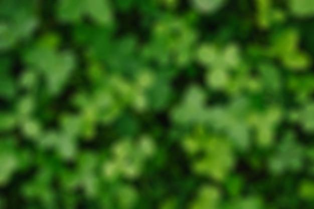 Folha de trevo verde borrão abstrata fundo desfocado