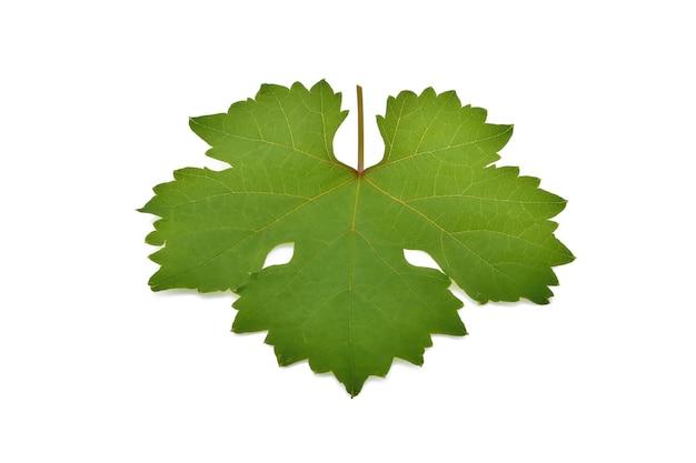 Folha de uva isolada