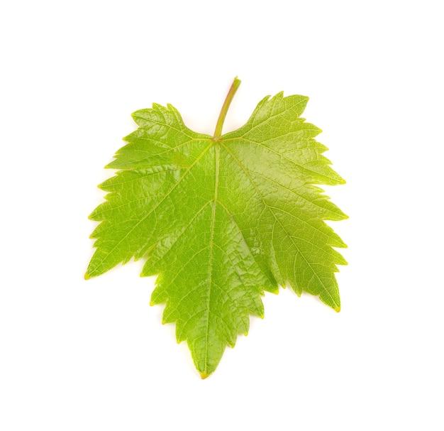 Folha de uva verde isolada no branco