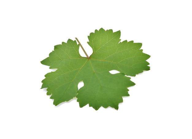 Folha de uvas. isolado em fundo branco