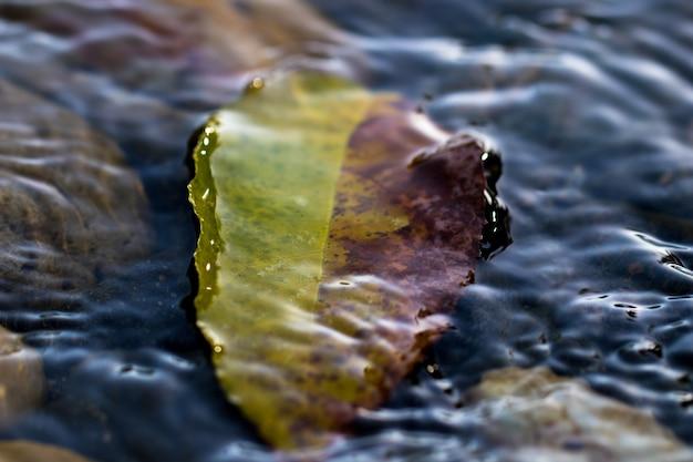 Folha debaixo d'água