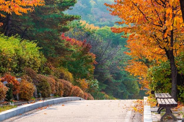 Folha do outono no parque com banco e rua de parque.
