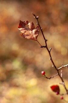 Folha em um galho com um fundo desfocado. foco seletivo raso na folha. cores castanhas.