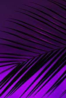 Folha fina de uma palmeira robelini nas cores rosa, roxa e azul neon. vertical fundo moderno