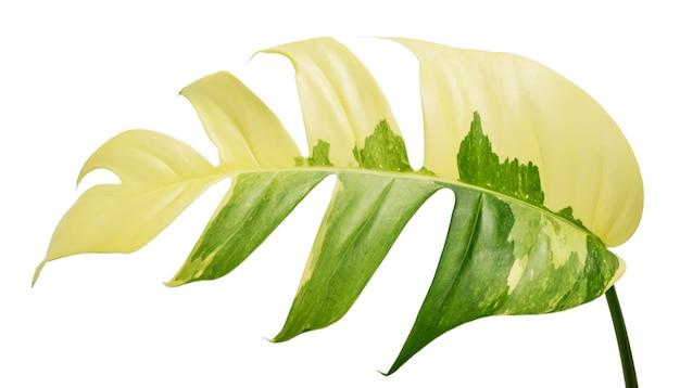 Folha isolada em fundo branco