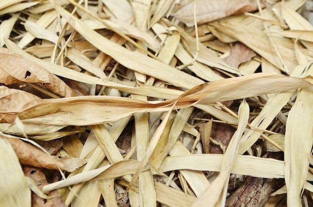 Folha longa na floresta seca, ásia