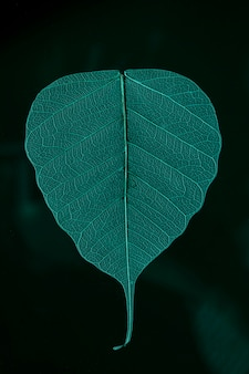 Folha macro bonita e detalhada