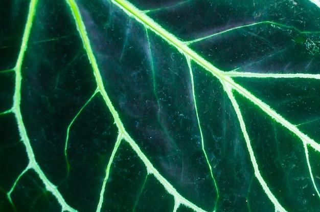 Folha macro verde com veios e células em evidência.