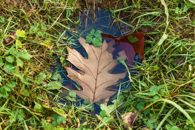 Folha marrom nas poças, uma folha amarela na poça. conceito de fundo de outono