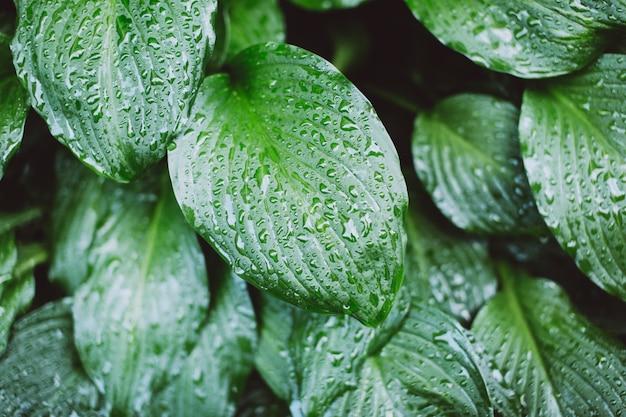 Folha molhada depois da chuva