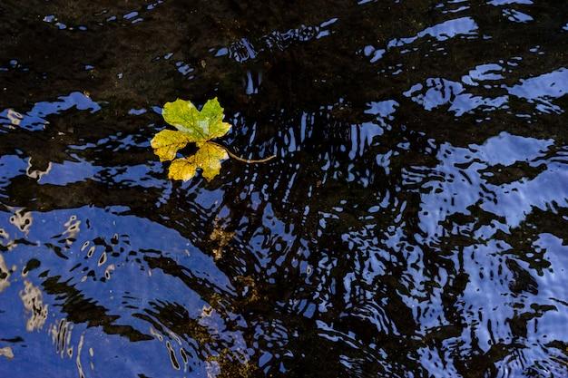 Folha na superfície da água parada no parque