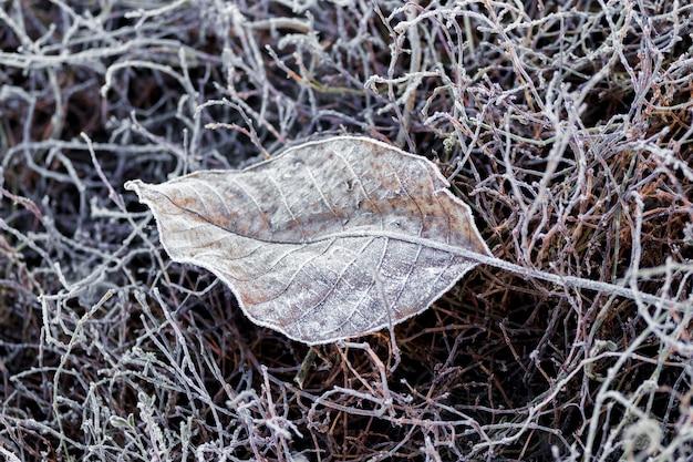 Folha seca de outono coberta de geada na grama seca