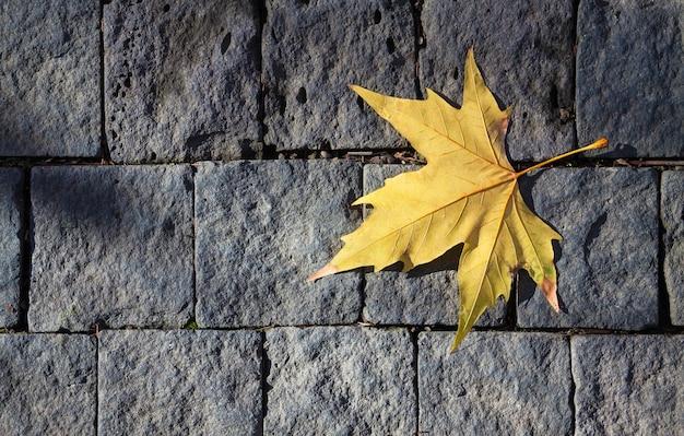 Folha seca em parede de tijolo cinza
