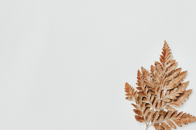 Folha seca marrom em papel branco