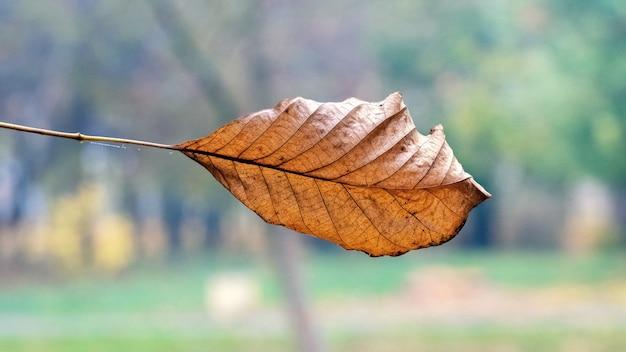 Folha seca marrom em um fundo desfocado de outono