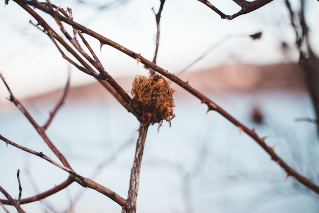 Folha seca marrom no galho de árvore marrom
