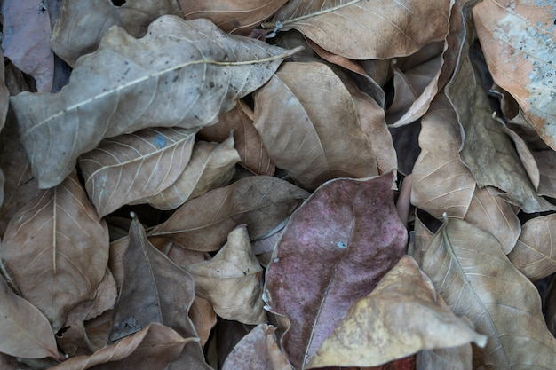 Folha seca marrom