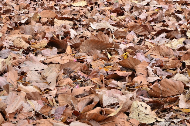Folha seca no chão