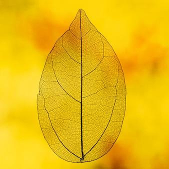 Folha transparente com luz de fundo laranja